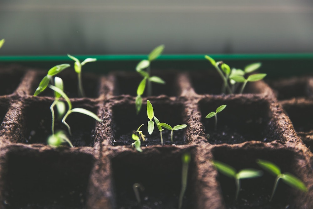 A close up of a container with divided spaces each holding soil and sprouting seedlings